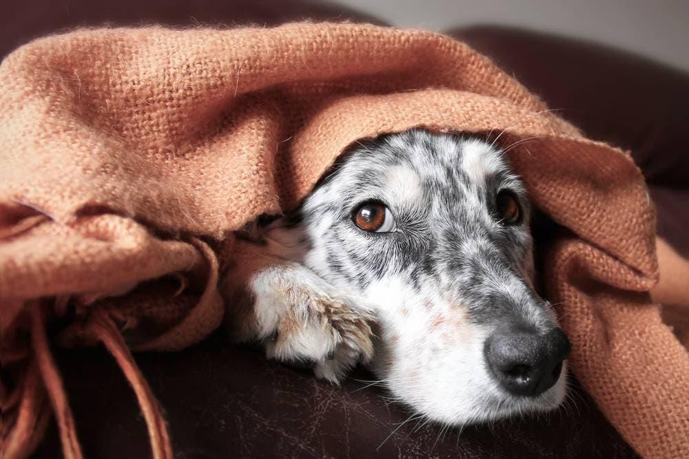 Cómo combatir el frío en nuestros perros