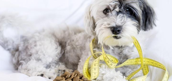 Cómo evitar la obesidad en las mascotas