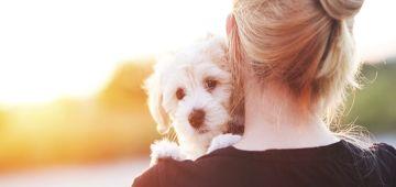 Cómo detectar y evitar golpes de calor en los perros