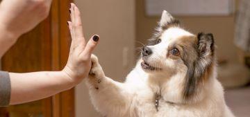 7 consejos para educar a tu perro