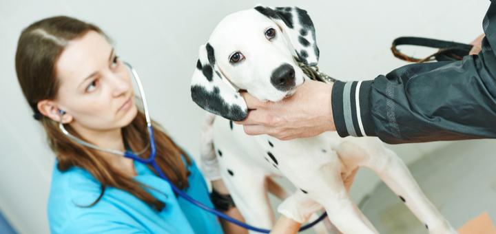 Qué opciones hay para trabajar con animales