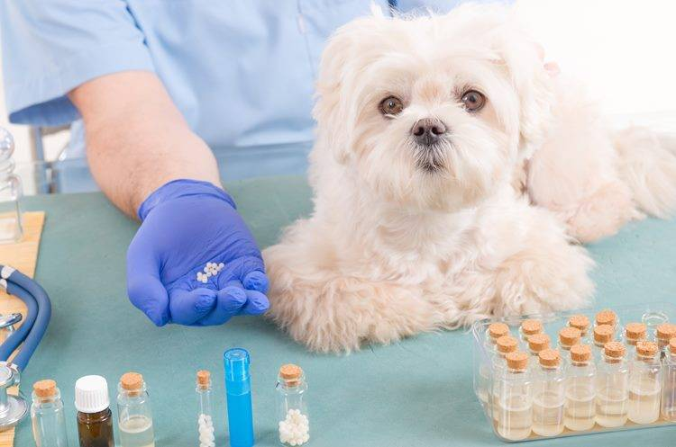 Curso de Auxiliar de Clínica Veterinaria Especialista en Homeopatía